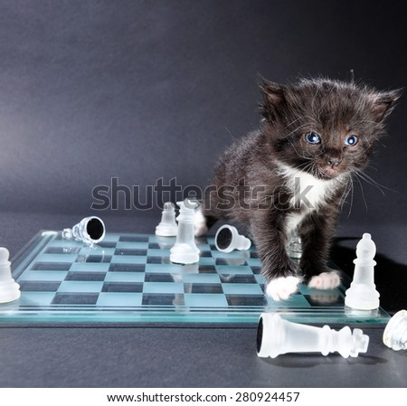 Studio shot of small black kitten on glass chess board with scattered pieces. - stock photo