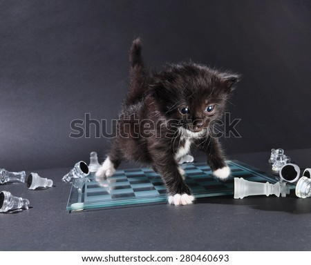 Studio shot of small black kitten walking across glass chess board with scattered pieces. - stock photo
