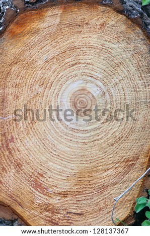 stump after removal of damaged tree in the park - stock photo
