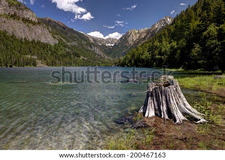 Stump by Lake MacDonald near St. Ignatius Montana and Ninepipes refuge in Montana. - stock photo