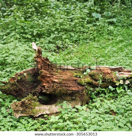Stump dead on the ground with grass - stock photo