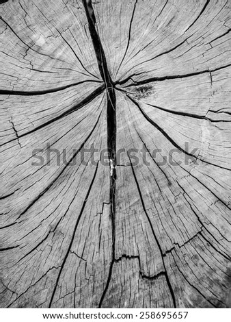 Stump of felled tree closeup details - stock photo
