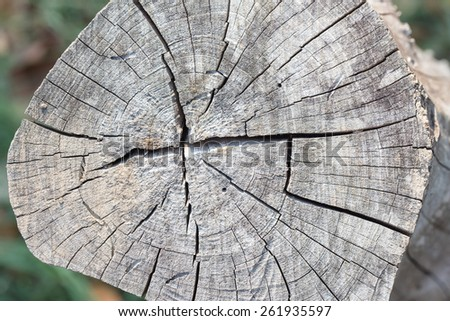 Stump of old tree closeup  - stock photo