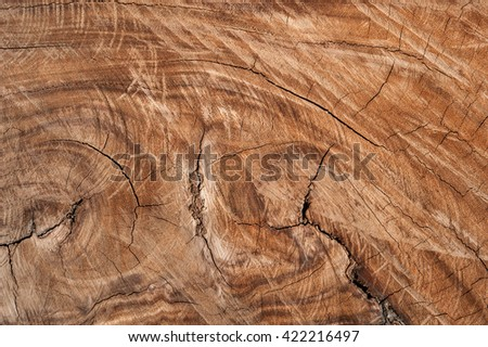 Stump of Tree Felled - Section of The Trunk Wood texture background - stock photo