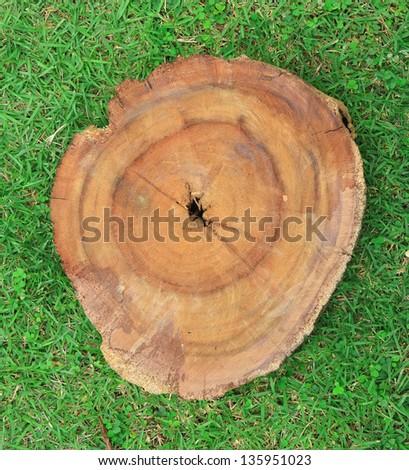 stump on bright green grass - stock photo