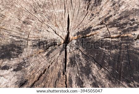 Stump with cracked wood. - stock photo