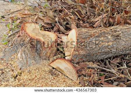Stumps after felling by chainsaw. - stock photo
