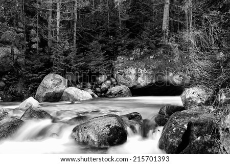 stunning abstract black and white nature landscape in forest with cold river  - stock photo