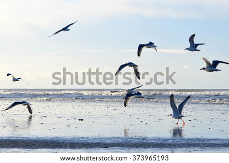 Stunning Deauville beach on a serene cloudy afternoon - stock photo