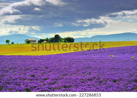 Stunning landscape with lavender field and farmhouse on background. Plateau of Valensole, Provence, France. Focus on lavander field  - stock photo