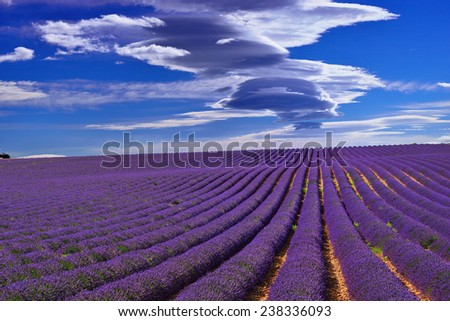 Stunning landscape with lavender field under dramatic sky. Plateau of Valensole, Provence, France - stock photo