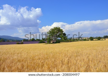Stunning landscape with wheat field and old farmhouse. Plateau of Sault, Provence, France - stock photo