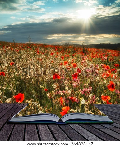 Stunning poppy field landscape in Summer sunset light conceptual book image - stock photo