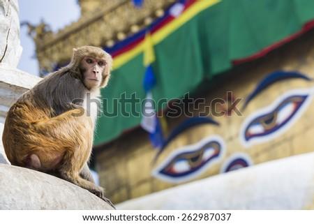 Stupa in Swayambhunath Monkey temple in Kathmandu, Nepal. - stock photo
