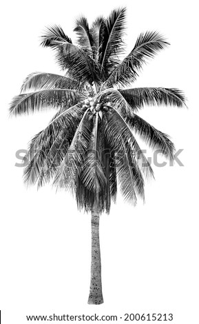 Stylish black and white palm tree with graphic shade fixer in white isolated background  - stock photo