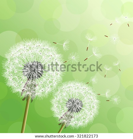 Stylish modern nature background with two flowers dandelions and flying fluff. Trendy floral green background with place for text. Abstract beautiful spring or summer wallpaper. Raster illustration - stock photo