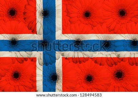 stylized national flag of norway with gerbera daisy flowers as concept and symbol of love, beauty, innocence, and positive emotions - stock photo