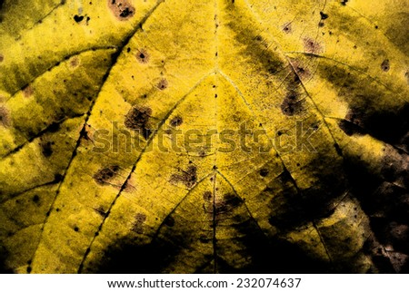 Stylized texture of a yellow autumn leaf (macro), can serve as a background - stock photo