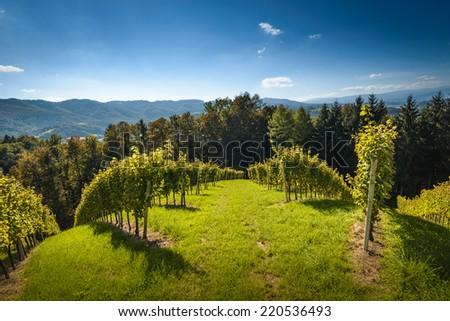 Styrian Tuscany Vineyard with windmill -klapotetz in foreground, Austria  - stock photo