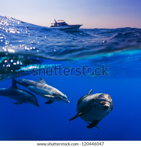 submerged image splitted by waterline three doplhins swimmimng underwater under dive boat - stock photo