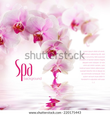 subtle spa/wellness background with orchid flowers - stock photo