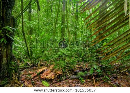 Subtropical forest Yasuni, Ecuador - stock photo