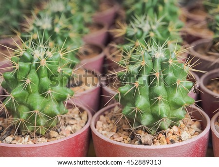 Succulent cactus closeup, Selective focus - stock photo