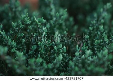 Succulent Cactus Plant - stock photo