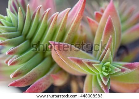 Succulent Cactus Plant In Garden - stock photo