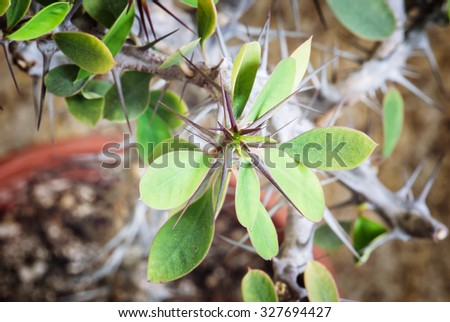 Succulent close up. Gardening theme. - stock photo