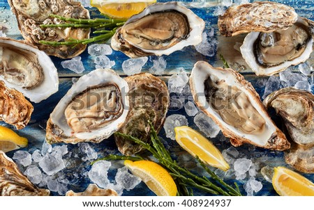 Succulent fresh opened marine oysters on ice to preserve freshness served with seaweed shoots and wedges of lemon in a close up overhead view on a blue background - stock photo