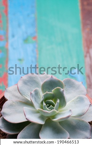 succulent - green cactus flower  on the wood table - stock photo