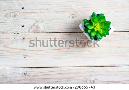 Succulent in pot wooden table background with copy space - stock photo