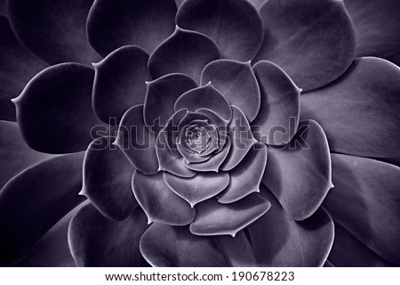 Succulent Plant - stock photo
