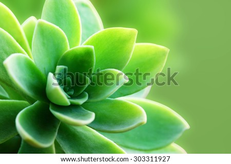 Succulent plant macro - with green background - space for text - stock photo