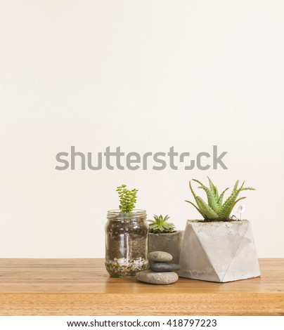 Succulent plants and stones, home decor - stock photo