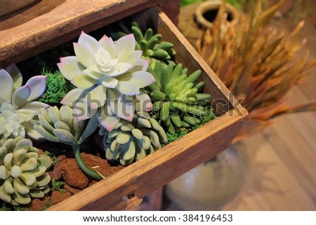 succulent plants in drawer - stock photo