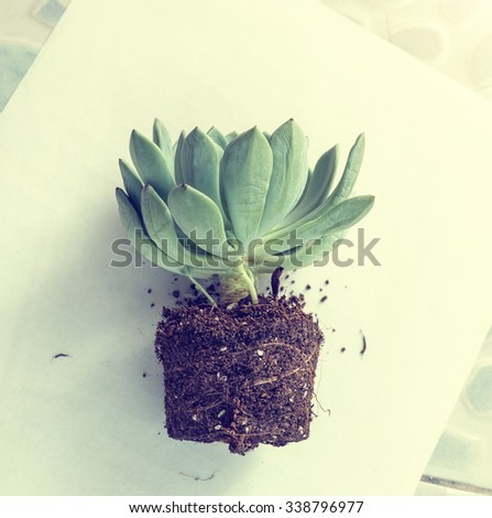 Succulent plants in the garden - stock photo