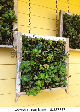 Succulents boxes hanging in an outdoor garden in this unique nature design element. - stock photo