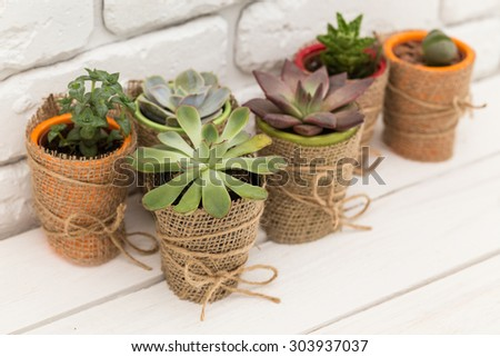 Succulents, house plants in colorful pots - stock photo