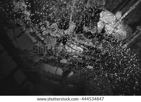 SUDAN, Red Sea, U.W. photo, Umbria wreck, Glassfish (Parambassis ranga) -FILM SCAN - stock photo