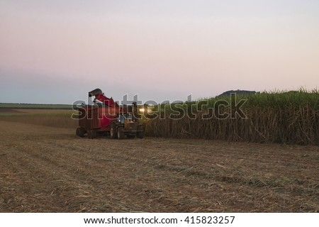 Sugar cane farm - Mechanical harvesting sugar cane field at sunset in Brazil - Tractor and combine harvesting sugar cane field - sugar cane plantation - stock photo