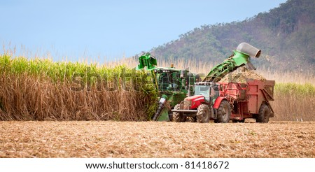 Sugar cane harvest in tropical Queensland, Australia - stock photo