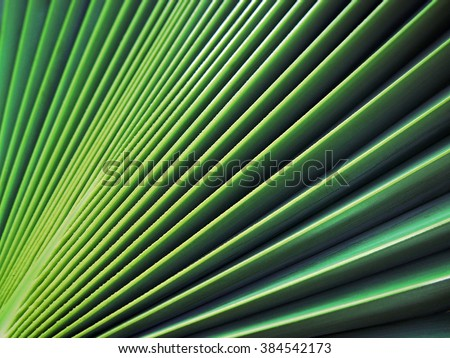 sugar palm leaf texture, abstract background - stock photo