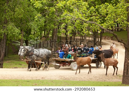 SUGARCREEK, OH - MAY 19, 2015:  A group of tourists, including school children on a field trip, riding a wagon driven by a young Amish woman through an exotic animal farm. - stock photo
