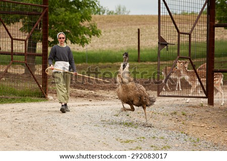 SUGARCREEK, OH - MAY 19, 2015:  Young Amish woman holding a shepherds staff, chasing an emu that had escaped from the fenced in enclosure of an exotic animal farm. - stock photo