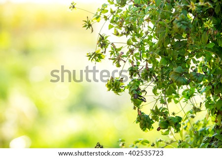 summer background, selective focus  - stock photo