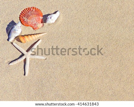 Summer background with beach decoration and different sea shells. Vacations background with copy space.  - stock photo