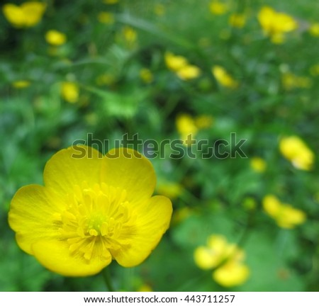 Summer background with beautiful yellow forests flowers - stock photo