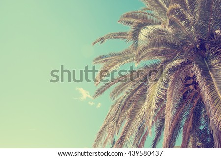 summer background with Palm tree against sky - stock photo